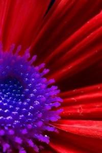 redpurpleflower