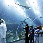 تصاویری زیبا از بزرگ ترین تونل آکواریم جهان در دیی امارات