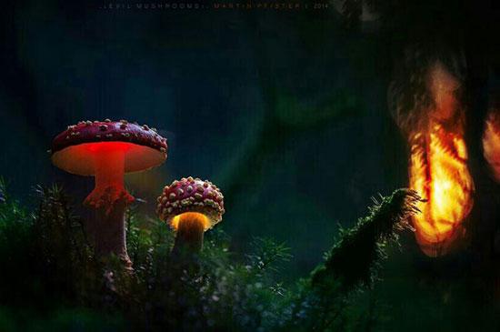 قارچ های نورانی