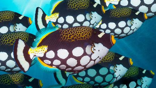 ماهی های زیبا در دریا
