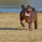 خنده دارترین عکس حیوانات (2)