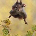 خنده دارترین عکس حیوانات (3)