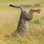 خنده دارترین عکس حیوانات (6)