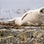 خنده دارترین عکس حیوانات (7)