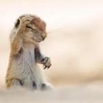 خنده دارترین عکس حیوانات (8)