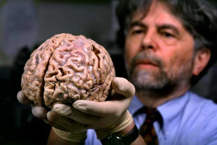 نحوه کار مغز انسان