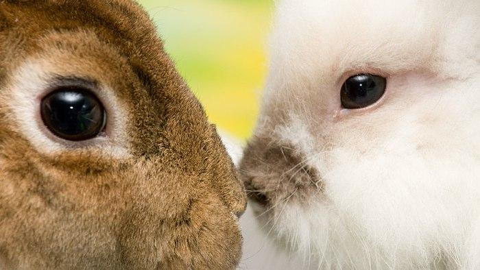 سلولهای چشم تولید شده در آزمایشگاه توانست دید خرگوش نا بینا را بازگرداند