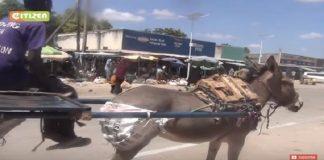 پوشک کردن الاغ در شهر وجیر کشور کنیا
