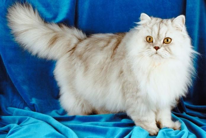 مترجم زبان گربه ها برای انسان