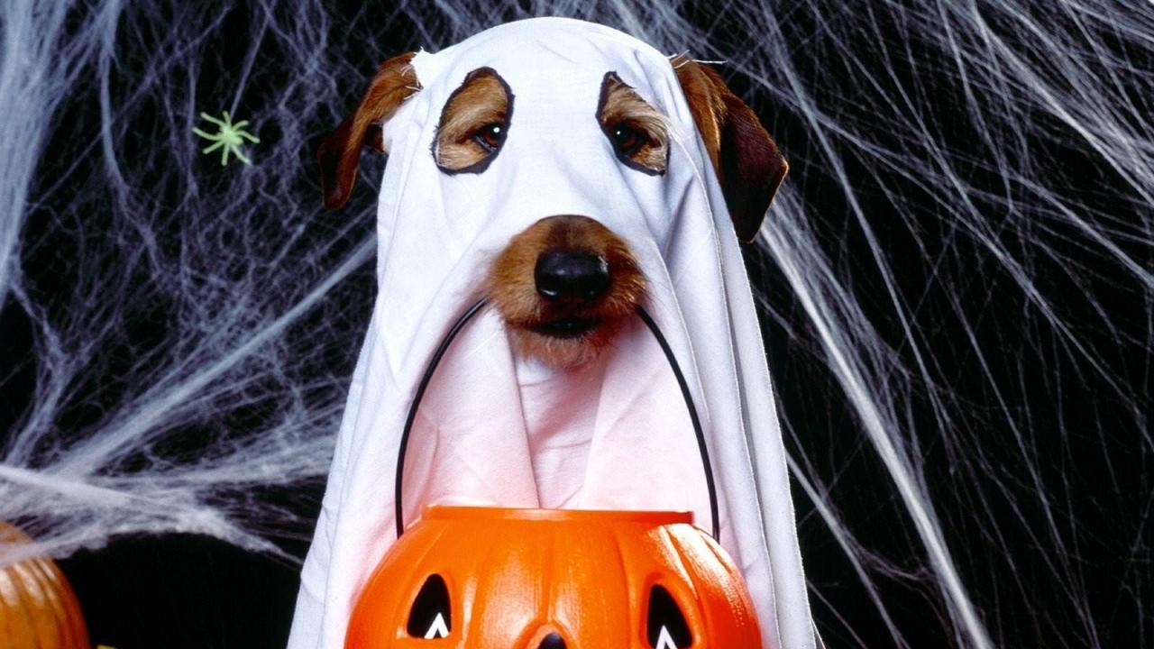 هالووین سگ ها