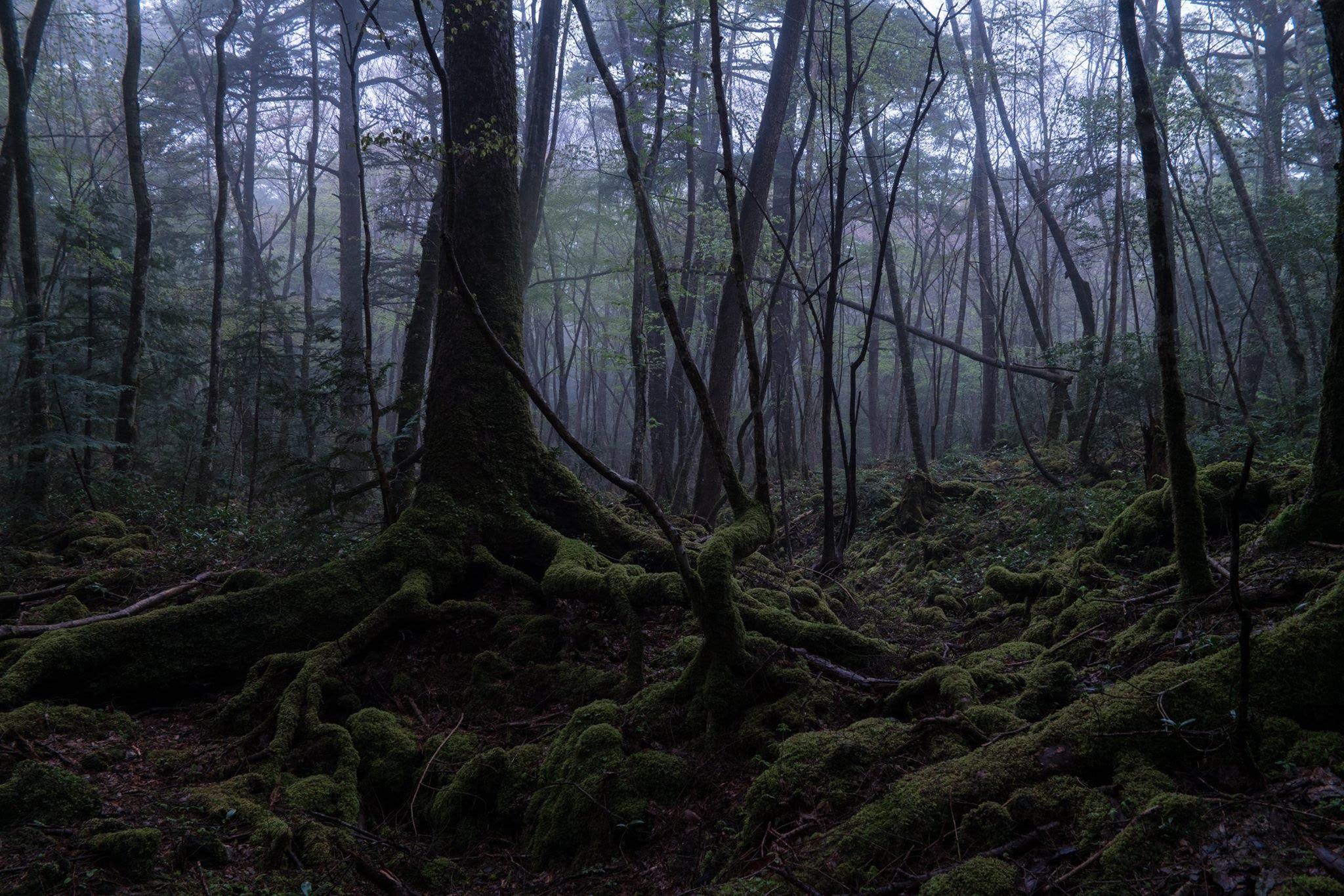 جنگل مرگ ( ژاپن )