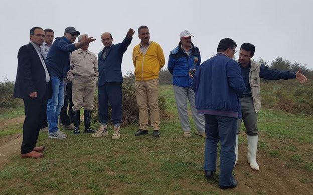 شرکت سامسونگ بیش از صد هزارمتر مربع زمین را در شمال ایران درختکاری