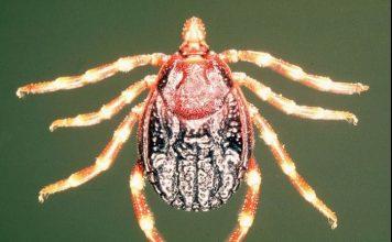 بیماری تب کریمه کنگو چیست؟
