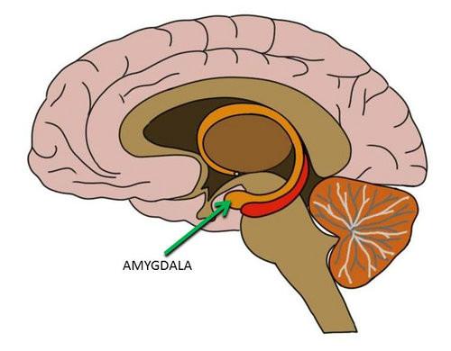 ساز و کار مغز